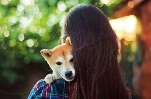Emotional Support Dog Certificate
