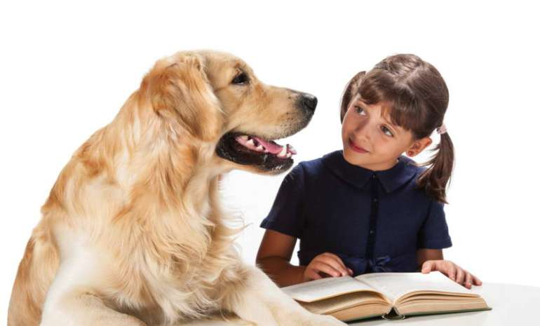 How To Certify A Therapy Dog