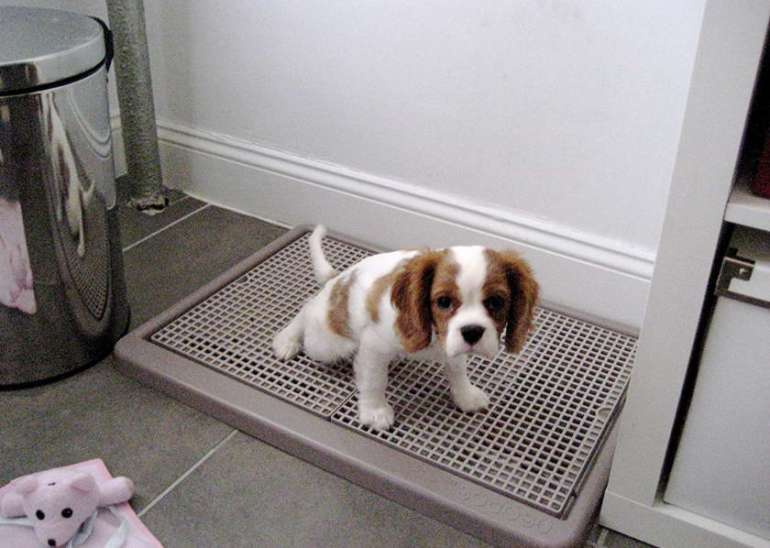 Litter Box To Keep Dogs Out