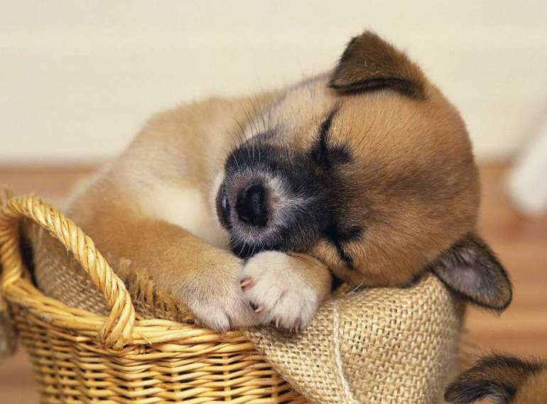 Sleeping Pills For Dogs
