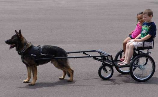 Wagon For Dog To Ride In