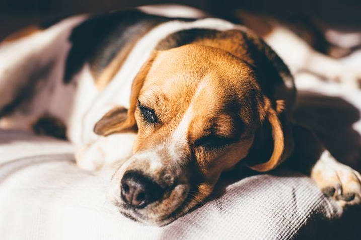 Zonisamide For Dogs