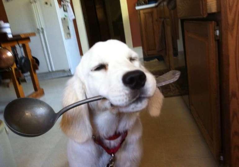 Bone Broth Recipe For Dogs