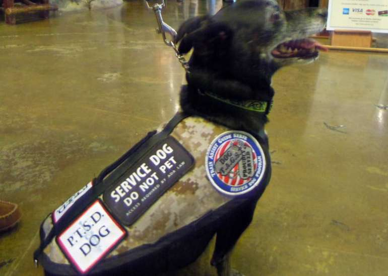 How To Get A Service Dog For Ptsd Veterans
