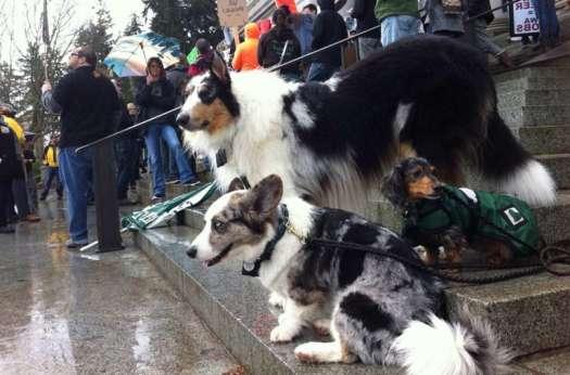 Washington State Dog Laws