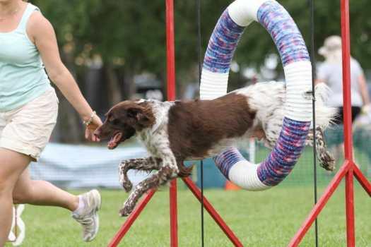 Dog Trainers Near Me