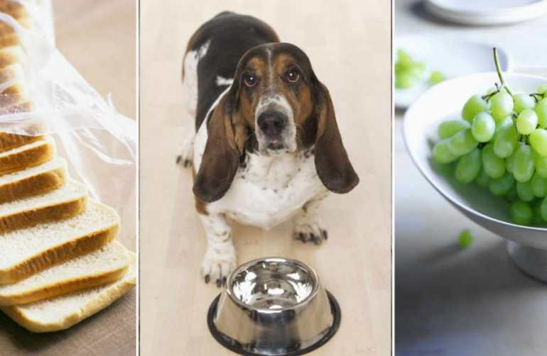 Foods Bad For Dogs