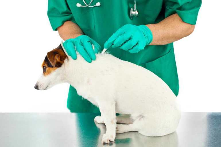 How To Kill Fleas On Dogs