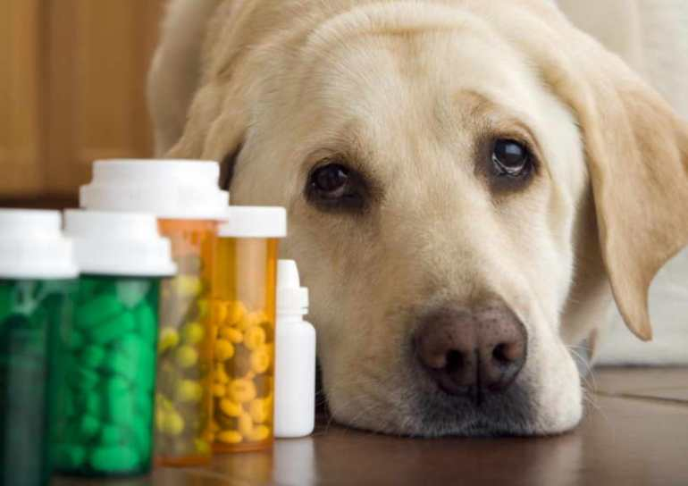 Pain Reliever For Dogs