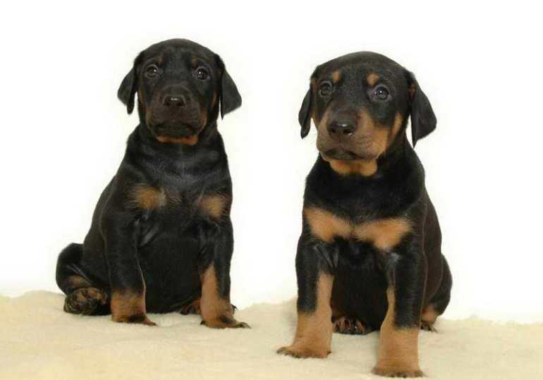 Us Dog Registry