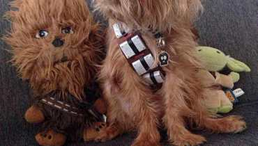 Chewbacca Costume Dog