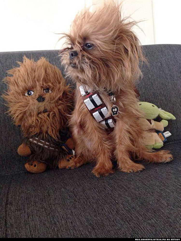 Chewbacca Costume Dog