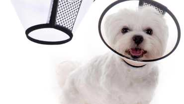 Cone For Dogs