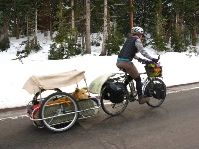 Dog Carrier For Bike