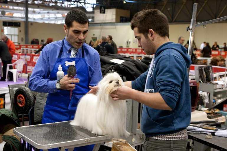 Dog Groomer Salary