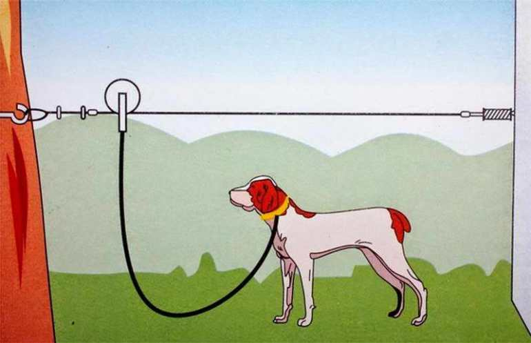 Dog Run Cable