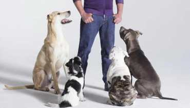 Dog Whisperer Tips
