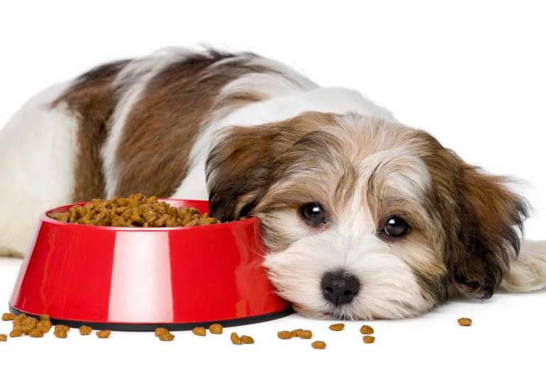 Food Allergies In Dogs