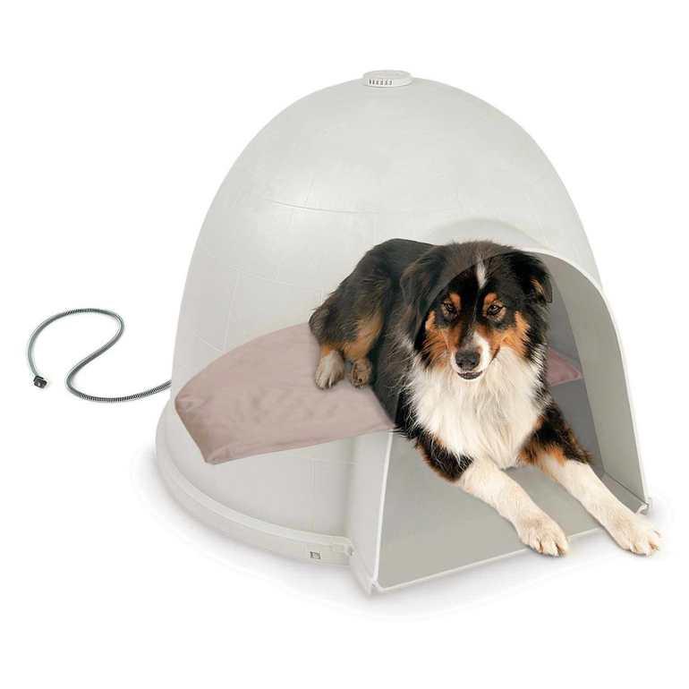Heated Dog Bed Amazon