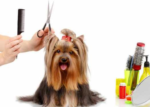 Dog Grooming Classes Near Me