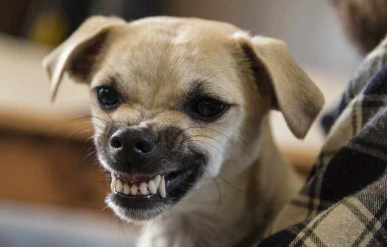 Dogs Trust Liability Insurance