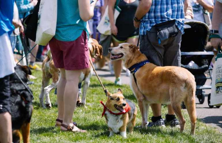 Best Dog Walks Seattle