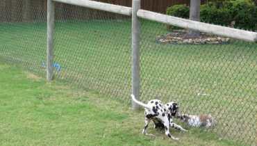 Innotek Dog Fence Collar Not Working