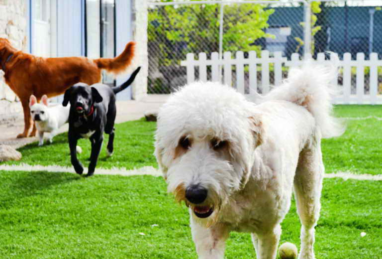 Dog Boarding Dallas Tx