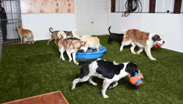Dog Boarding Frisco Tx