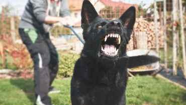 Dog Training Salt Lake City