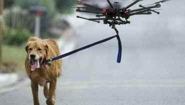 Drone Walking Dog