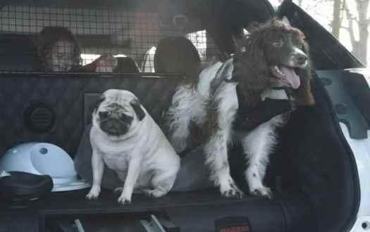 Nissan Dog Friendly Car