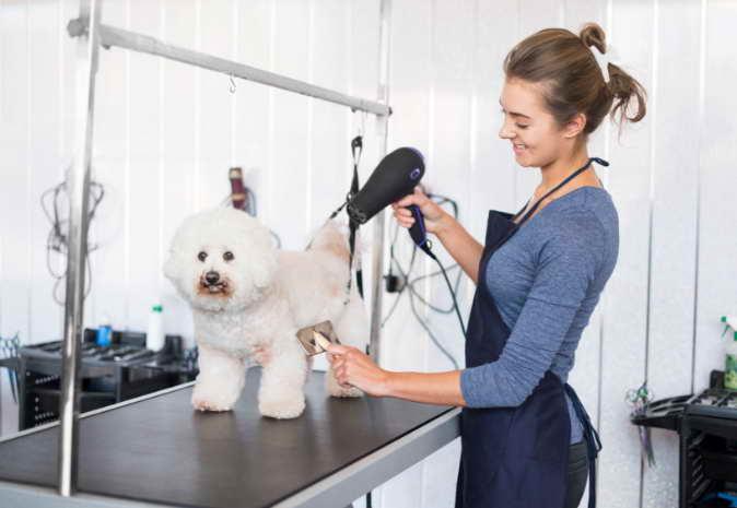 Dog Grooming School Florida