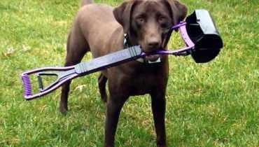 Dog Poop Scooper Service