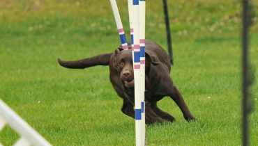 Dog Training Courses Near Me
