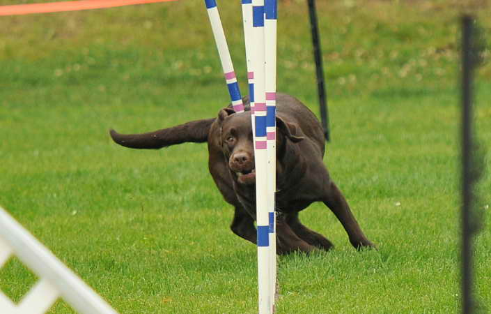 Dog Training Courses Near Me