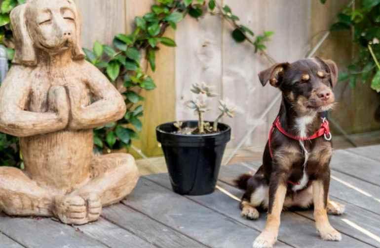 Dog Training Houston Tx