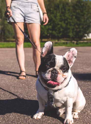 Where To Find Dog Walker in Colorado Springs