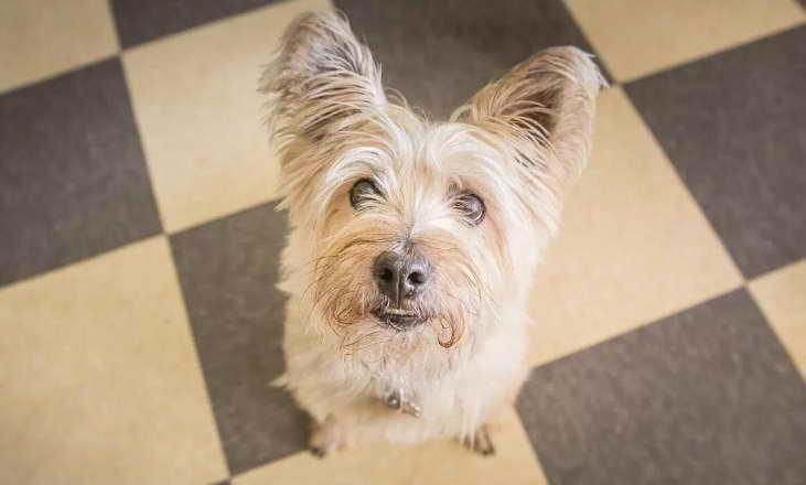 Dog Walker Kansas City