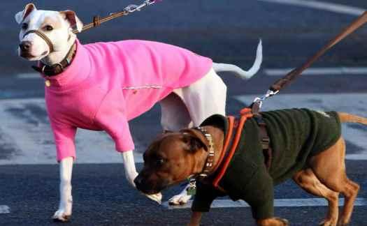 Dog Walking Fees