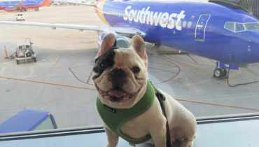 Flying With Emotional Support Dog Southwest