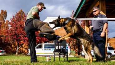 Police Dog Training Schools