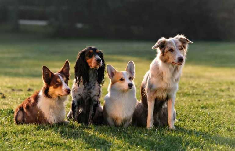 Dog Training Santa Rosa