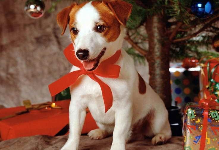 Dog Walkers Christmas