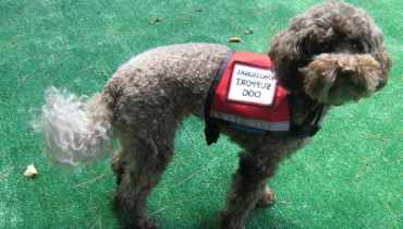 Legitimate Emotional Support Dog Registration