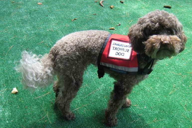 Legitimate Emotional Support Dog Registration