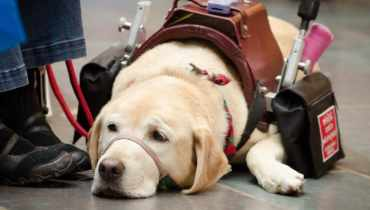 Register Service Dog Texas