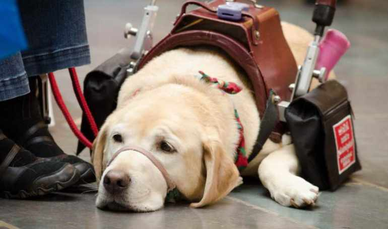 Register Service Dog Texas