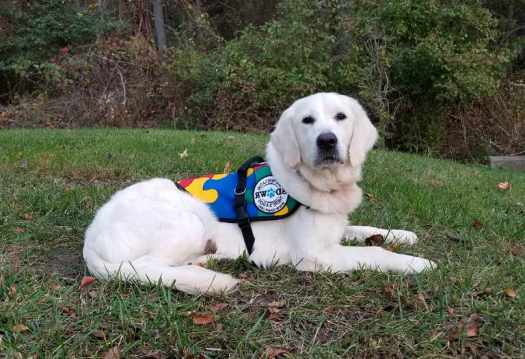 Sdwr Service Dogs Reviews