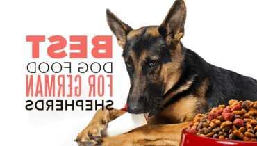 best cheap dog food for german shepherd